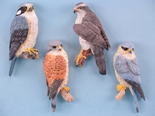 Birds of Prey Magnets