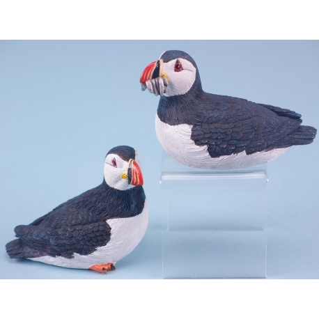 Sitting Puffin