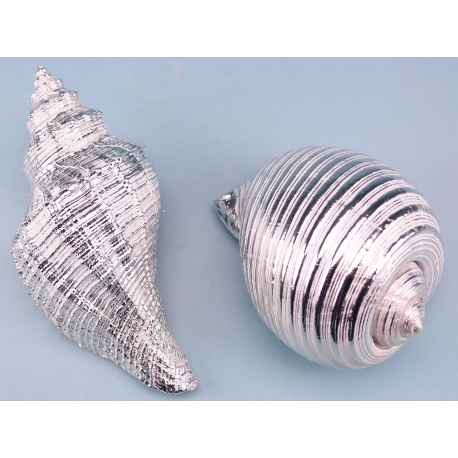 Shell assortment - large